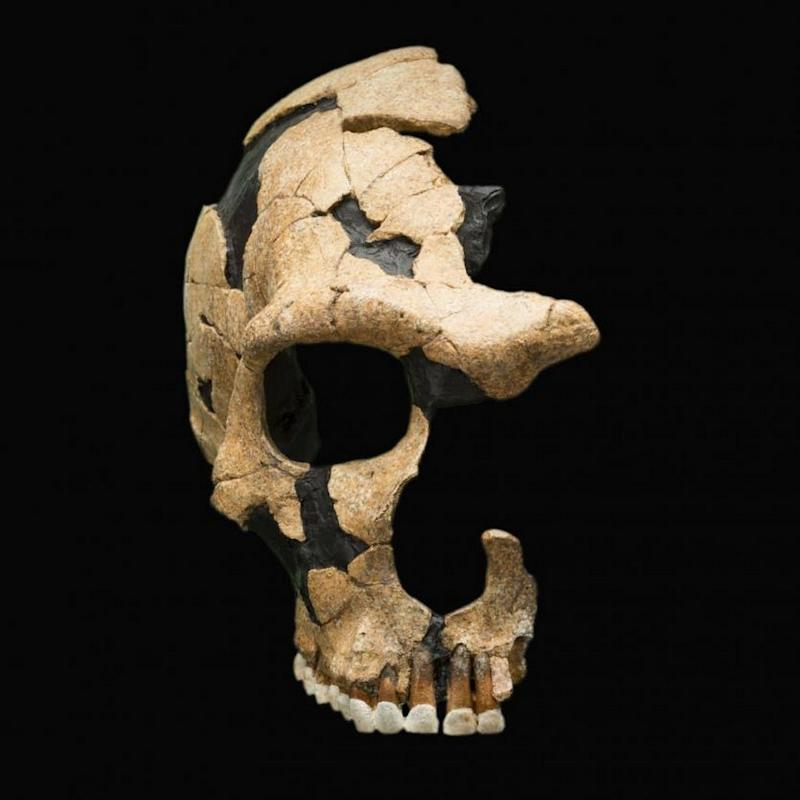 A Neanderthal skull shows head trauma, evidence of ancient violence. Image credit: Smithsonian National Museum of Natural History