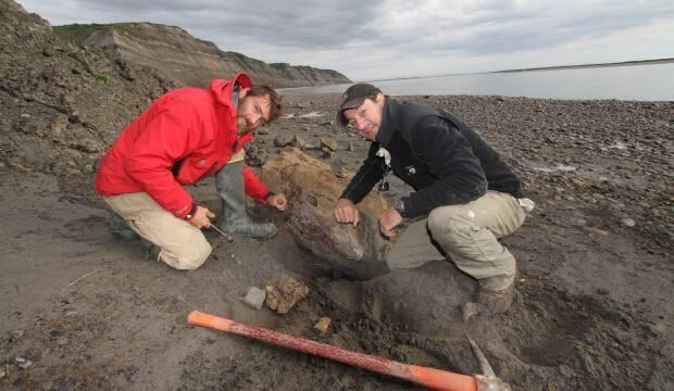Pat Druckenmiller and Greg Erickson chisel out a bone from a rock slab along the Colville River on Alaska's North Slope. (Kevin May - image credit)