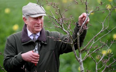 Prince Charles prunes a tree at Dumfries House - Credit: Chris Jackson