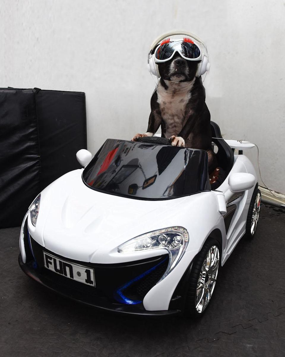 Cleo behind the wheel of one of her miniature cars (Picture: Caters)