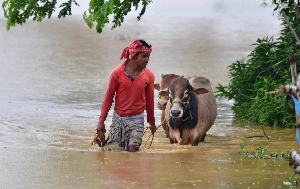 NAGAON,INDIA-JULY 22,2020 :A villagers with his cattle wade through a flooded street at a flood-affected village in Nagaon district of Assam, India - PHOTOGRAPH BY Anuwar Ali Hazarika / Barcroft Studios / Future Publishing (Photo credit should read Anuwar Ali Hazarika/Barcroft Media via Getty Images)