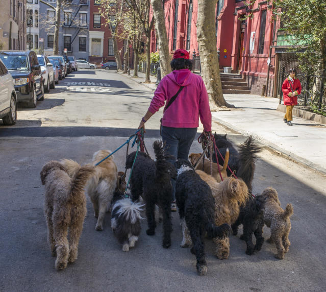 Dog walkers are high in demand in expensive markets like NYC, but aren't represented across America.