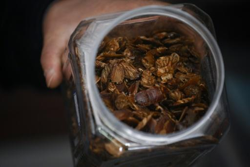 Chinese cockroach farmer Li Bingcai recently sold one tonne of the dried insects to a pharmaceutical factory for nearly 90,000 yuan ($13,500)