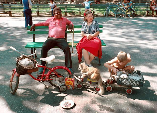 <p>Tender vittles, cats on parade, Central Park Mall, Manhattan. (Photograph by D. Gorton/NYC Parks Photo Archive/Caters News) </p>