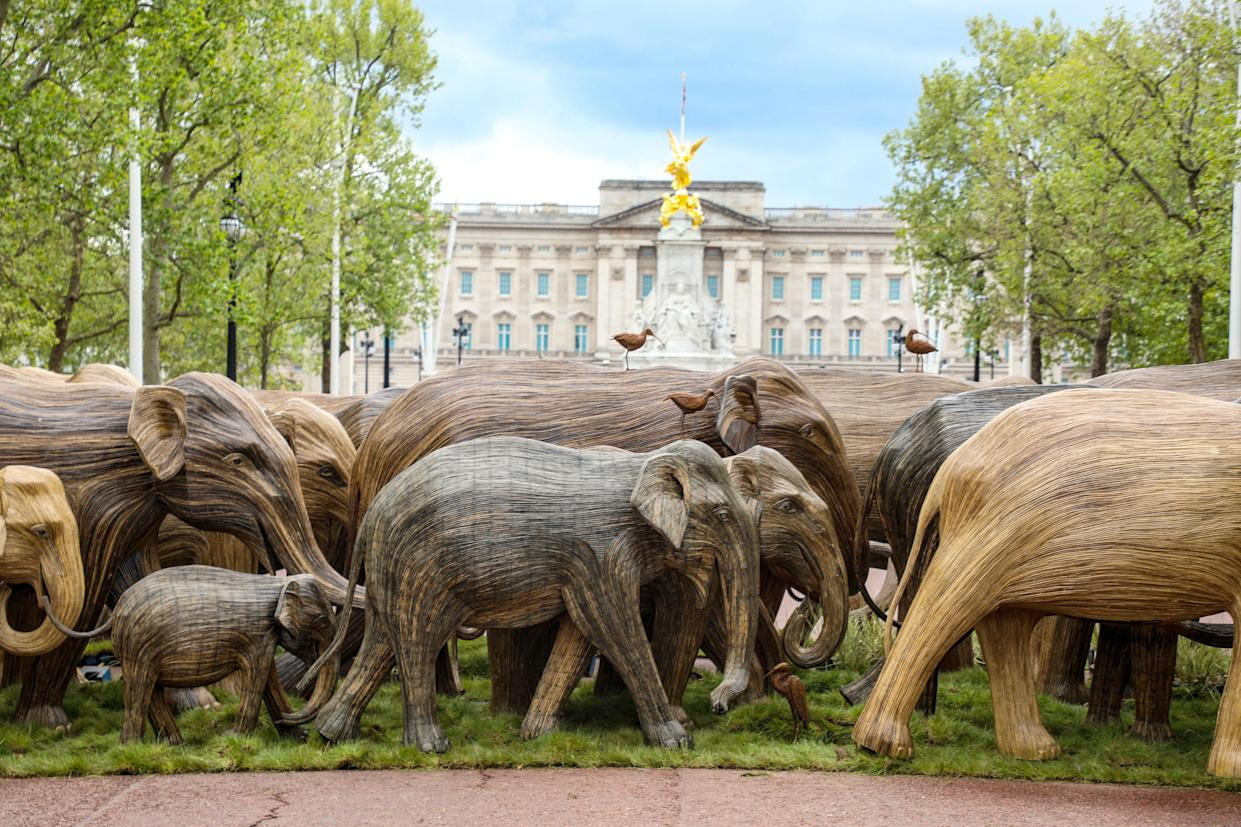 LONDON, UNITED KINGDOM - 2021/05/15: Life-size elephant sculptures are displayed in The Mall as part of Coexistence, an environmental art campaign produced by Elephant Family a charity that works to save endangered Asian wildlife from extinction. The charity was founded by The Duchess of Cornwall late brother, Mark Shand. (Photo by Brett Cove/SOPA Images/LightRocket via Getty Images)