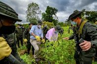 Colombian Defence Minister Carlos Holmes Trujillo (C) and US Ambassador to Colombia Philip Goldberg (L), look at coca plants during an operation to eradicate the illicit crop in Tumaco, Narino Department, on December 30, 2020