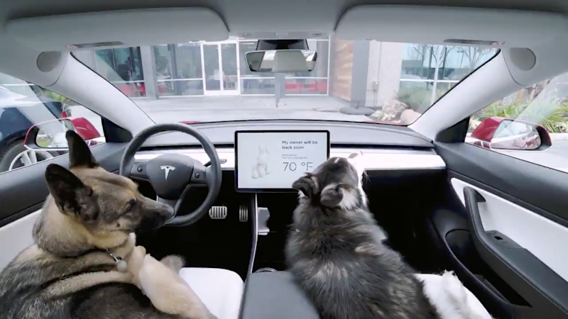 Animal charities have 'serious concerns' over Tesla's Dog Mode