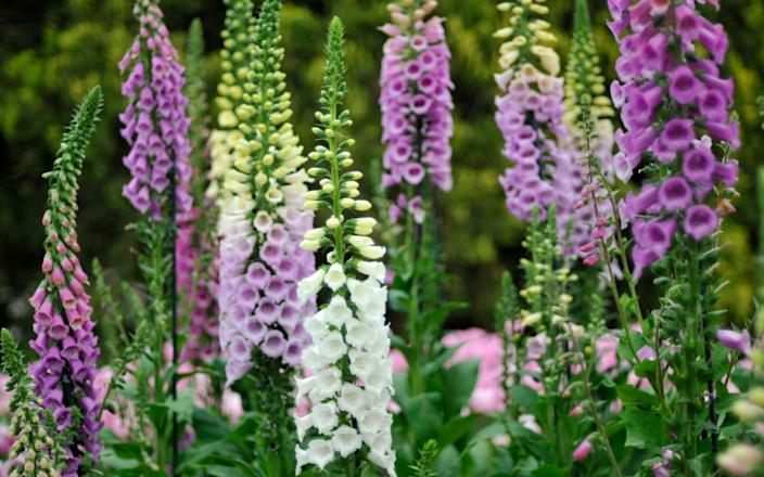 Best places to buy plants online top nurseries home delivery 2021 - Getty Images