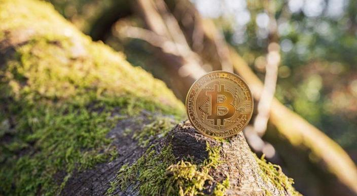 A Bitcoin (BTC) coin sitting on a mossy piece of wood.