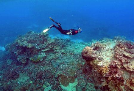 """FILE PHOTO - A man snorkels in an area called the """"Coral Gardens"""" near Lady Elliot Island, on the Great Barrier Reef, northeast of Bundaberg town in Queensland, Australia, June 11, 2015. REUTERS/David Gray/File Photo"""