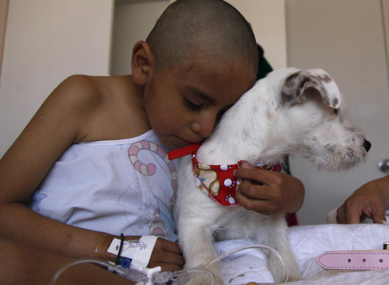 In this Aug. 8, 2012 photo, eight-year-old Edison hugs farewell to Juci, a Parson Russell terrier, after playing with her at the SOLCA hospital in Quito, Ecuador. The dog's owner says her dogs are used every Wednesday to cheer up the most discouraged of the patients. Hospital workers began to notice that on Wednesdays fewer children had to be kept over because of problems after chemotherapy. Doctors found that youngsters' adrenaline levels rose from being with the dogs, boosting their resistance to chemo's side effects. (AP Photo/Dolores Ochoa)