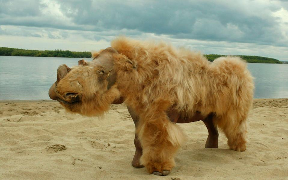 The extinction of many species of megafauna, including woolly rhinos, has previously been attributed to climate change - AFP