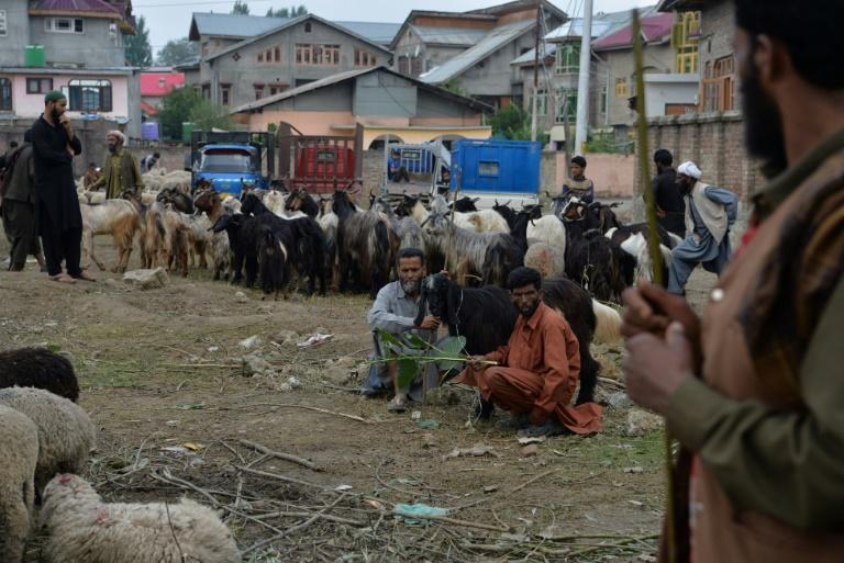 During the annual Eid al-Adha, Muslim faithful slaughter tens of thousands of sheep and goats and distribute the meat among relatives and orphanages (AFP Photo/Sajjad HUSSAIN)