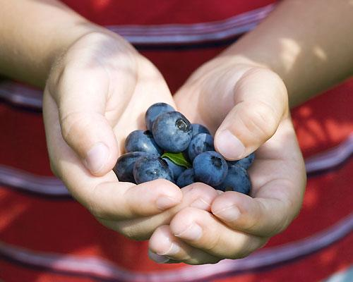 """<strong>Blueberries</strong><br><br>Every superfood list seems to include antioxidant-rich blueberries, offering nutritionist-approved fibre, potassium, vitamin C, low-sugar content, and <a target=""""_blank"""" href=""""http://ca.shine.yahoo.com/six-best-fat-burning-superfoods-20110511-210000-642.html"""">anti-aging, fat-burning properties</a>. Give your kids a <a target=""""_blank"""" href=""""http://www.canadianliving.com/health/nutrition/top_10_superfoods_for_kids.php"""">sweet fix sans refined sugars</a> by adding the berries to their cereal, yogurt or morning shake.<br><br>Make healthy living a hands-on activity and recruit your kids to <a target=""""_blank"""" href=""""http://recipes.howstuffworks.com/menus/10-superfoods-for-kids7.htm"""">help you grow berries at home.</a>"""