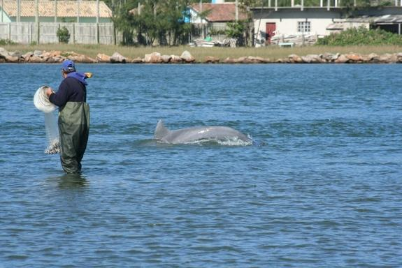 The dolphins give head or fin signals to the fishermen to signal when to throw their nets.