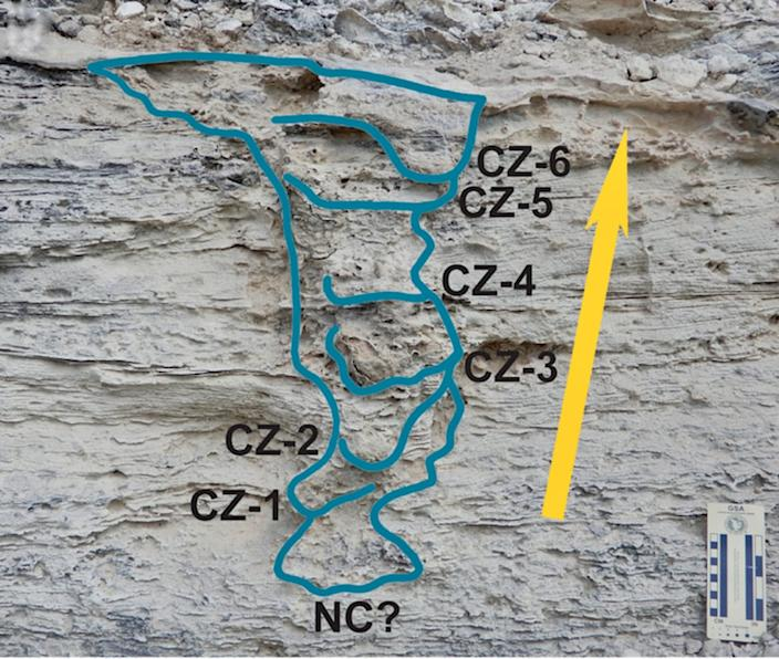 """<div class=""""inline-image__caption""""><p>The burrow deconstructed into its behavioral parts. NC? is a trace of the possible nest chamber, CZ (1-6) shows the compaction zones, where the mother iguana packed sand behind her on her way out, and the arrow shows her overall direction of movement while exiting.</p></div> <div class=""""inline-image__credit"""">Anthony J. Martin, CC BY-SA</div>"""