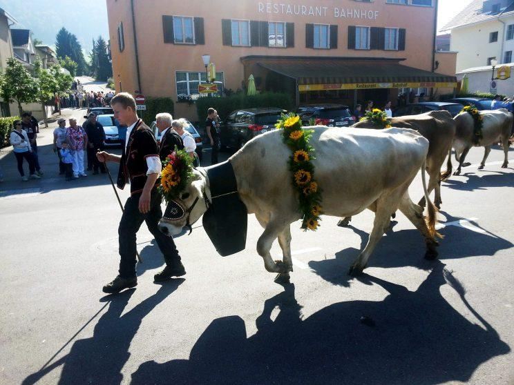 Animal rights: Ms Holten campaigned to get rid of cowbells (CEN)