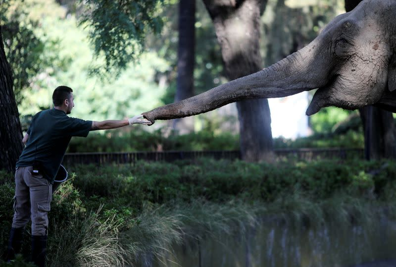 Veterinarian offers apples to Asian elephant Mara in her enclosure at the former city zoo now known as Ecopark in Buenos Aires, in Buenos Aires