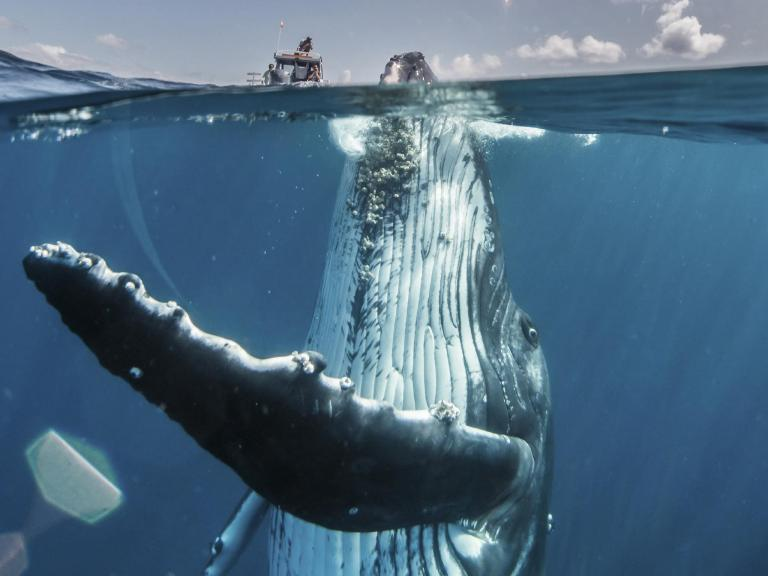 Remarkable photos from National Geographic Travel Contest week four