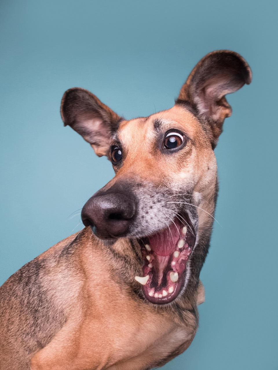 Mars Petcare Comedy Pet Photo Awards (Photo: ©Elke-Vogelsang/Mars Petcare Comedy Pet Photo Awards 2020)