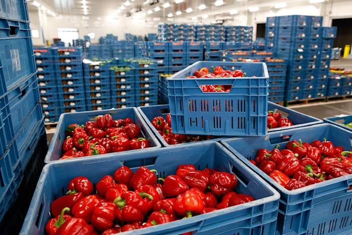 Red peppers are packed in boxes, August 11, 2014 at the Zaltbommel fruit and vegetable market in the Netherlands (AFP Photo/Bas Czerwinski)