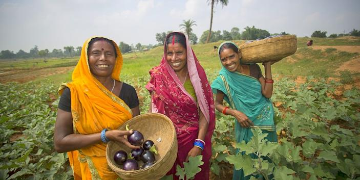 In order to sustain their families, these women farmers initially concentrated on producing indigenous crops with higher nutritional value over commercial value.