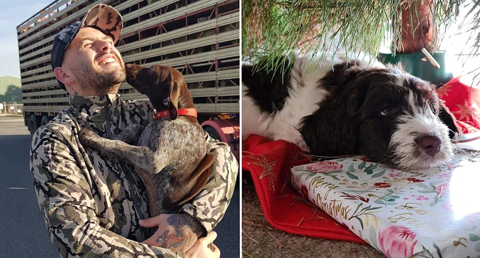 Left is Jordan and Gunnar the day they picked him up. Right is Winnie sitting under the Christmas tree.