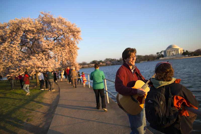 Nick Cath of Fairfax, Va., plays the guitar for Amanda Pappas, of Falls Church, Va., as they view the cherry blossom trees near the Tidal Basin, on Wednesday, April 9, 2014, in Washington.(AP Photo/ Evan Vucci)