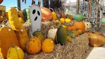"""<p><strong>Lino Lakes, Minnesota (Sept 18–Oct 31)</strong></p><p>They offer a creative corn maze shape every year, but the real tradition at <strong><a href=""""http://www.waldochfarm.com/index.php"""" rel=""""nofollow noopener"""" target=""""_blank"""" data-ylk=""""slk:Waldoch Farm"""" class=""""link rapid-noclick-resp"""">Waldoch Farm</a></strong> is the pumpkin patch. For four generations, the Waldoch family has been growing pumpkins and welcoming people to the farm. You can feed the animals (and yourself) at this historic farm, located just 20 minutes from the Twin Cities. Though admission to the corn maze is $12 for guests age 3 and over, visiting the pumpkin patch is free!</p>"""