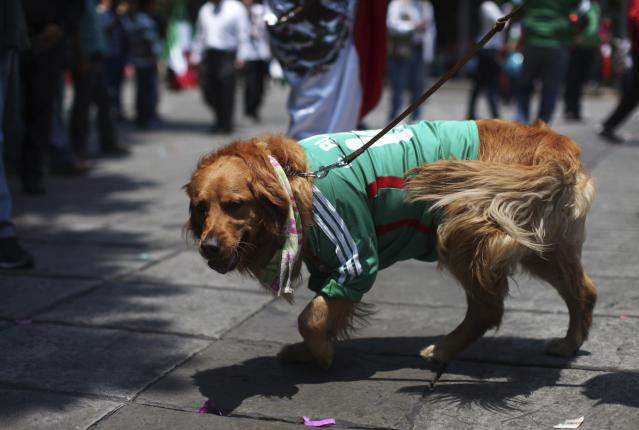 A Mexican soccer fan walks her dog, clad in a jersey of Mexico's team, after Mexico's win over Cameroon in their 2014 World Cup soccer match, at the Angel de la Independencia monument in Mexico City, June 13, 2014. REUTERS/Alexandre Meneghini (MEXICO - Tags: SPORT SOCCER WORLD CUP ANIMALS)