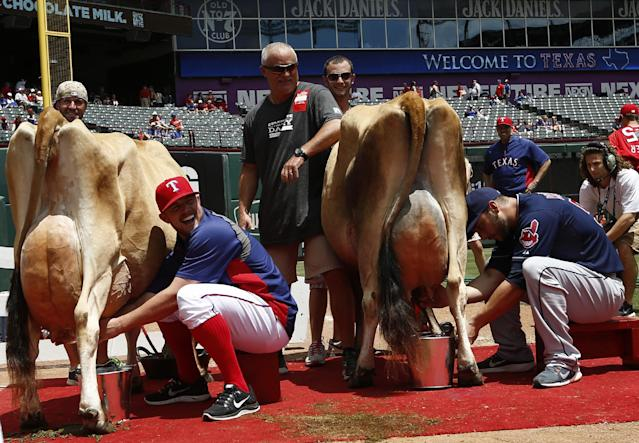 Texas Rangers' Robbie Ross, left, and Cleveland Indians' George Kottaras, right, compete in a cow milking contest before their baseball game, Saturday, June 7, 2014, in Arlington, Texas. Kottaras won the contest beating Robbie Ross for the second straight year. (AP Photo/Jim Cowsert)