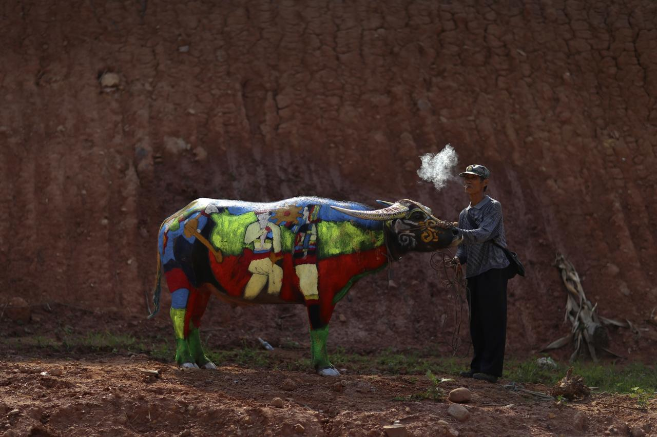 A man smokes as he waits with his painted buffalo before a buffalo bodypainting competition in Jiangcheng county, Yunnan province
