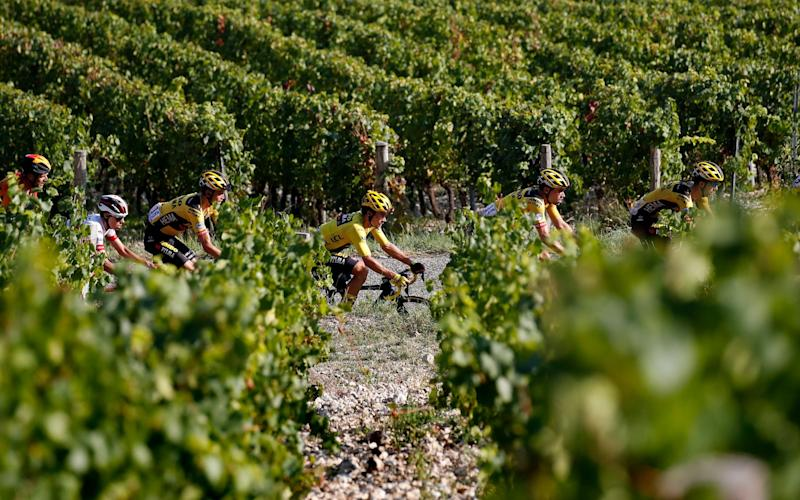 Tour de France riders cycle through vineyards -The strict Covid protocols in place at the Tour de France seem to be working - but there can be no complacency - SHUTTERSTOCK