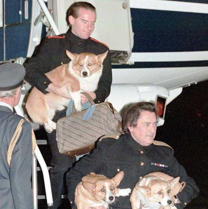 "<p>Here, staff members unload the corgis from the royal plane. Bob Shields, a former navigator for the Queen's flight, said that <a href=""https://www.express.co.uk/travel/articles/1307835/royal-travel-queen-elizabeth-ii-royal-flight-corgis-dogs-foul"" rel=""nofollow noopener"" target=""_blank"" data-ylk=""slk:her dogs were well trained"" class=""link rapid-noclick-resp"">her dogs were well trained</a> and never had accidents on board.</p>"