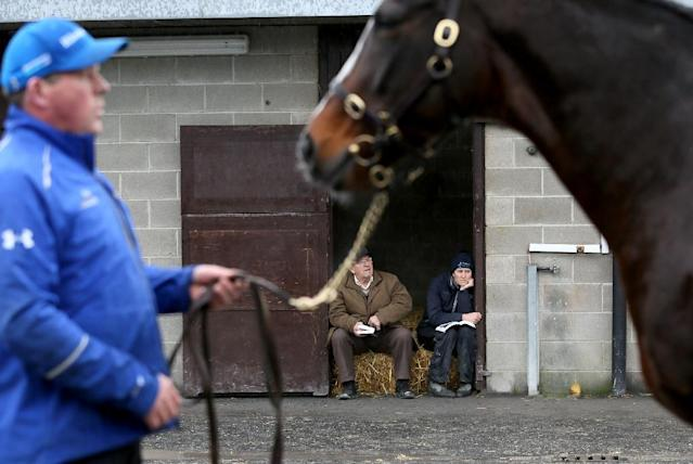 Talk of Brexit dominated last week's foal and breeding stock sales at Goffs, Ireland's premier public auction house, where buyers from across the world spent 41 million euros. (AFP Photo/PAUL FAITH)