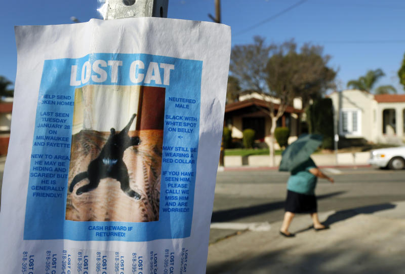 This Feb. 13, 2014 photo shows a poster seeking a lost cat placed on a street corner in the Highland Park area of Los Angeles. The search for your feline friend tends to be tougher going than if you had lost a dog, experts say. But you can protect against the loss of your cat by microchipping it and strapping on an ID collar. (AP Photo/Nick Ut)