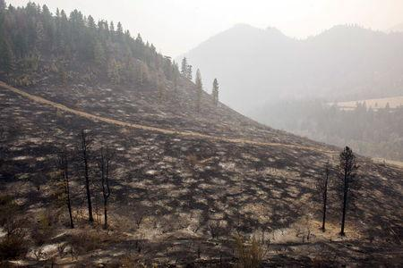 A hillside burned by the Okanogan Complex fire is pictured near Tonasket, Washington August 25, 2015. REUTERS/David Ryder
