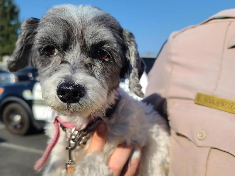 Dog owner was later arrested on an animal cruelty charge: Riverside County Sheroff's Office
