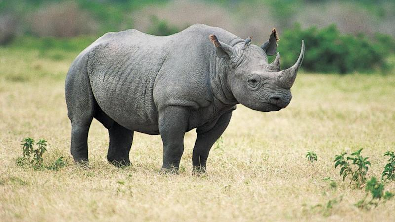 Texas Hunting Club Auctioning off Permit to Hunt Endangered Rhino