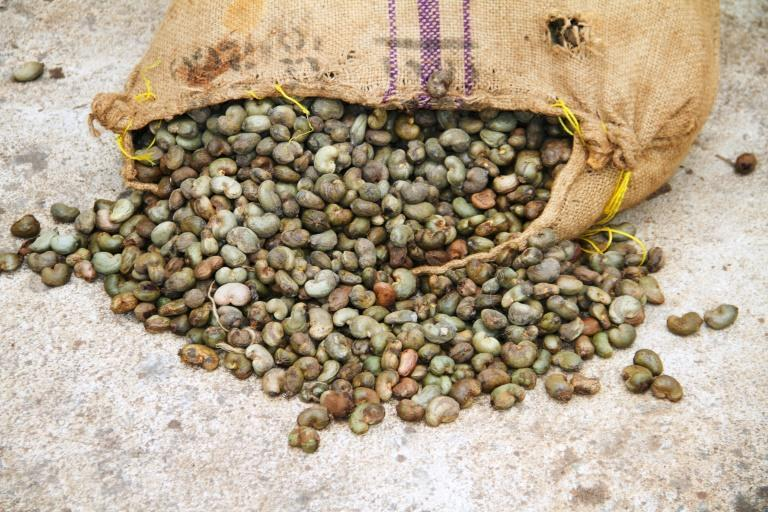 """Cashews are sometimes known as """"grey gold"""" as they are big business in Ivory Coast"""