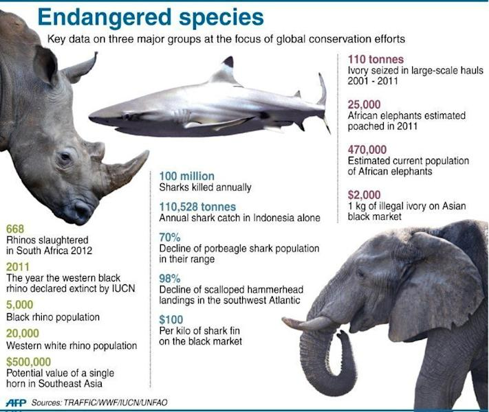 Graphic fact file on threats to rhinos, African elephants and sharks. African elephants face the worst crisis since global trade in ivory was banned almost a quarter-century ago, with the risk of extinction rising in worst-hit nations, conservationists said Wednesday