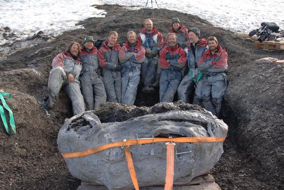 The huge pliosaur fossils had to be cast in plaster before being removed from the Svalbard site.