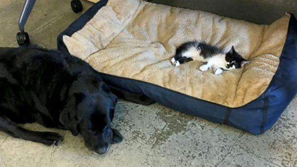 PHOTO: DOG loves to 'snuggle up with them on their dog beds,' said Support Dogs, Inc. owner, Anne Klein. (Support Dogs Inc.)