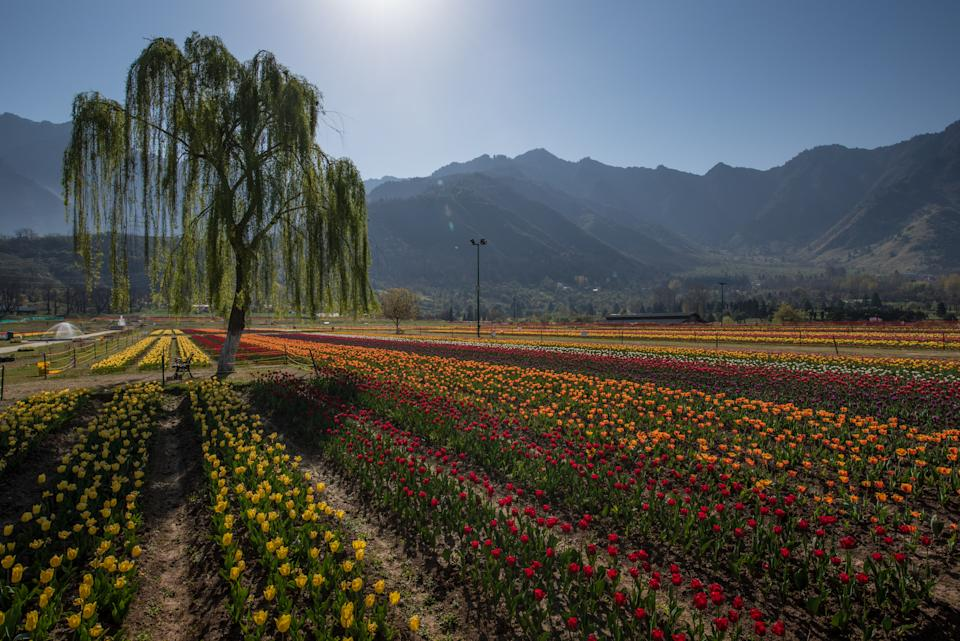 The Indira Gandhi Memorial is the greatest tulip garden during the month of April. This is the best time for travelling when Tulip Garden in Kashmir holds a Festival.