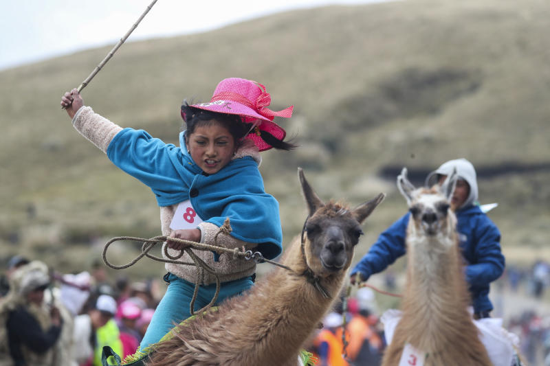 Milena Jami races her llama to win first place in the 7 to 8-year-old age group, at the Llanganates National Park, Ecuador, Saturday, Feb. 8, 2020. Wooly llamas, an animal emblematic of the Andean mountains in South America, become the star for a day each year when Ecuadoreans dress up their prized animals for children to ride them in 500-meter races. The annual event is meant to draw attention to the park's high wetlands and the need to preserve them. (AP Photo/Dolores Ochoa)