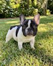 """<p>""""Introducing Minnie Pearl. Welcome to the family little one ❤️,"""" Reese wrote on Instagram in November 2020.</p><p><a href=""""https://www.instagram.com/p/CHYJ_CDASvF/"""" rel=""""nofollow noopener"""" target=""""_blank"""" data-ylk=""""slk:See the original post on Instagram"""" class=""""link rapid-noclick-resp"""">See the original post on Instagram</a></p>"""