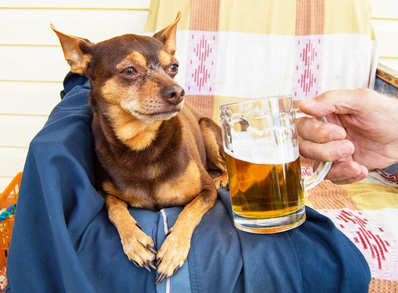A cute dog and a cold beer: a perfect pairing: istock