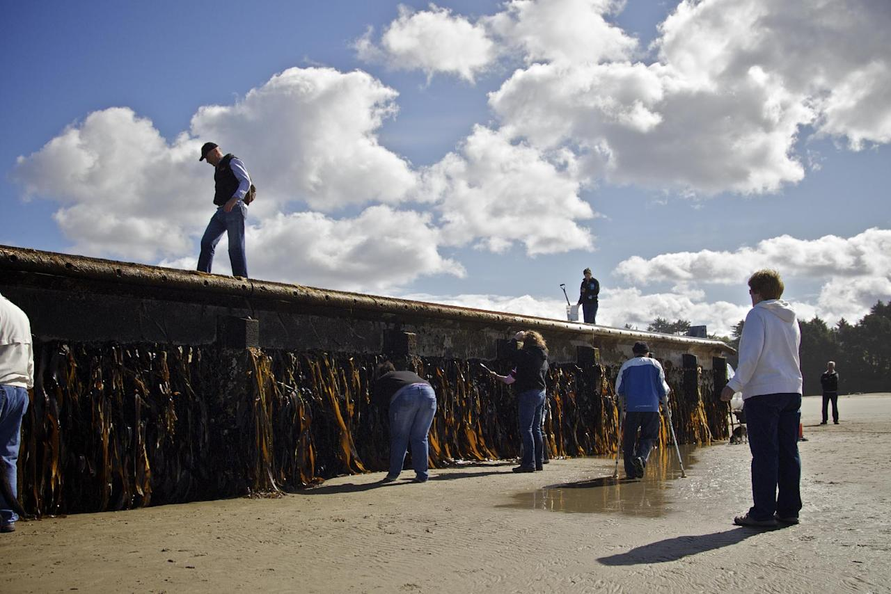 Scientists from OSU and BLM agents inspect a massive dock with Japanese lettering that washed ashore on Agate Beach on Wednesday, June 6, 2012 a mile north of Newport, Ore. Evidence is mounting that the nearly 70-foot floating dock that washed ashore came from an area of Japan devastated by last year's tsunami. (AP Photo/The Oregonian, Thomas Boyd) MAGS OUT; TV OUT; LOCAL TV OUT; LOCAL INTERNET OUT; THE MERCURY OUT; WILLAMETTE WEEK OUT; PAMPLIN MEDIA GROUP OUT