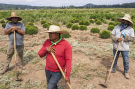 Pedro Lucas, center, nephew of farm worker Sebastian Francisco Perez who died last weekend while working in an extreme heat wave, talks about his uncle's death, Thursday, July 1, 2021, near St. Paul, Ore. (AP Photo/Nathan Howard)