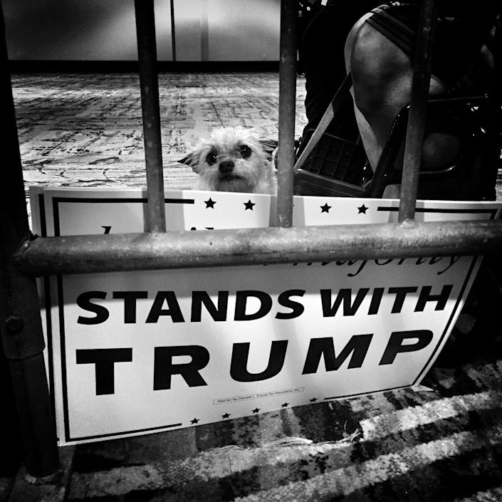 <p>A dog is seen next to a campaign sign at a Trump rally in the Woodlands, Texas. (Photo: Holly Bailey/Yahoo News) </p>